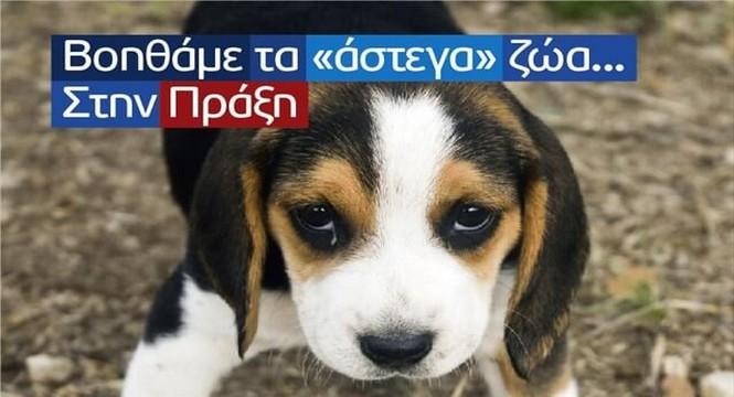 """Δήμ. Χαλκηδόνος : Εγκρίθηκε η χρηματοδότηση από το """"Φιλόδημος ΙΙ"""" - Καταφύγιο  αδέσποτων ζώων - VimaThess-News.gr"""
